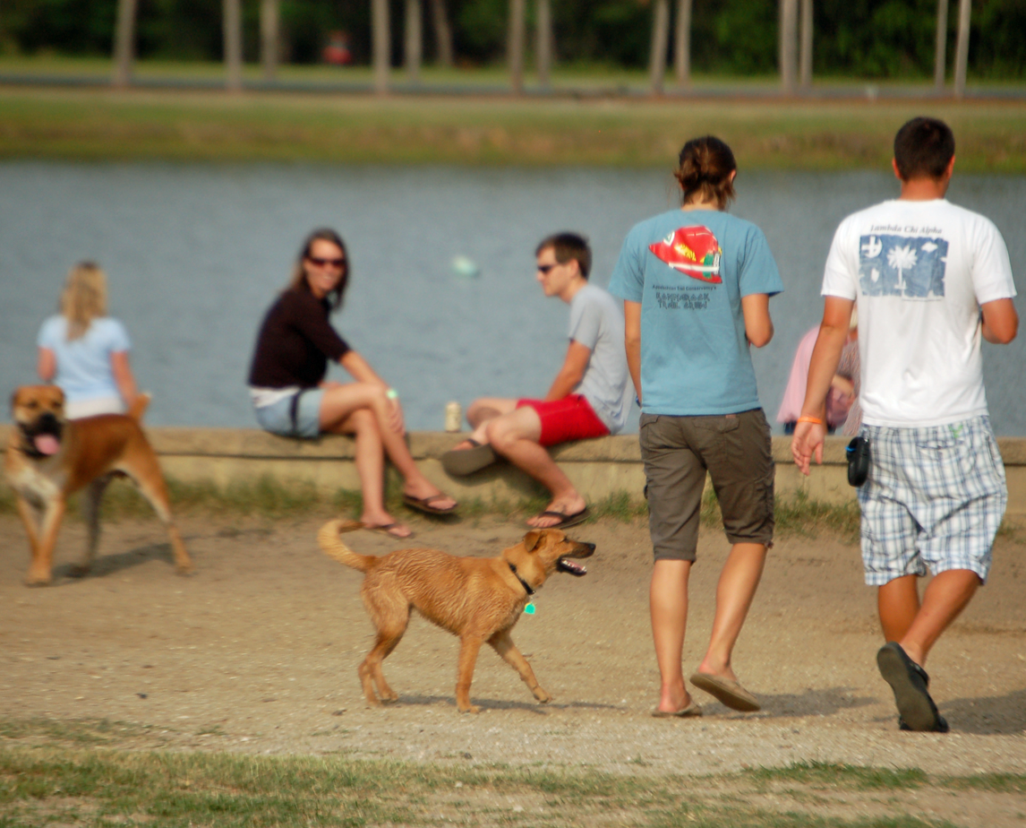The dog park at James Island County Park