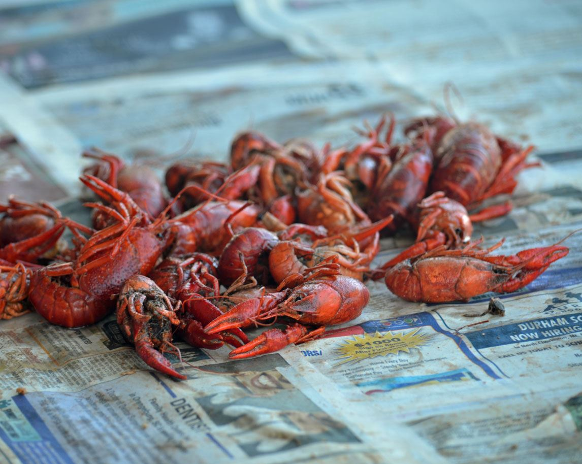 Crawfish on newspaper at the Lowcountry Cajun Festival