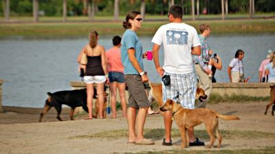 Image of people and their dogs at Yappy Hour at James Island County Park