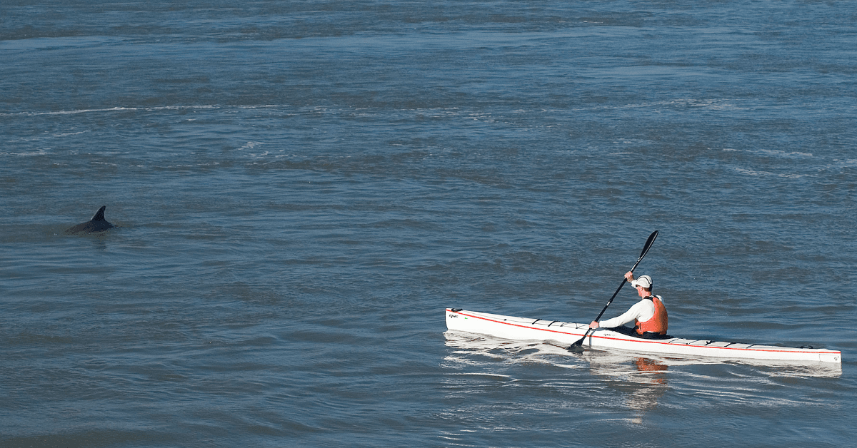 Image of a kayaker on the water and a dolphin surfacing nearby