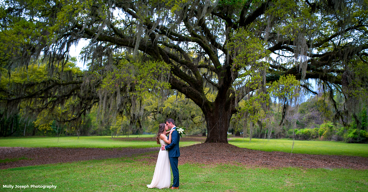 Image of a bride and groom under a live oak tree courtesy of Molly Joseph Photography
