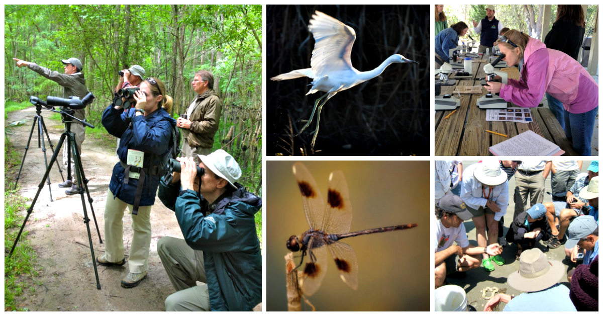 A collage of five images: a group looking through binoculars in a forest, a white heron, a dragonfly