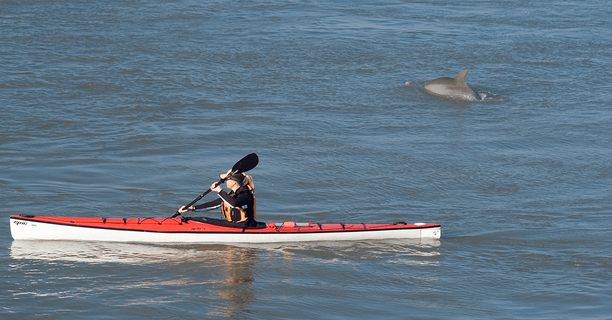 Kayaker on the water and a dolphin surfacing in the background