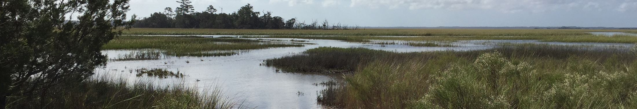 View of the marsh at Meggett County Park