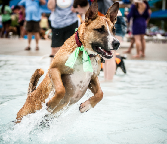 A dog splashes at Dog Day Afternoon at Whirlin' Waters