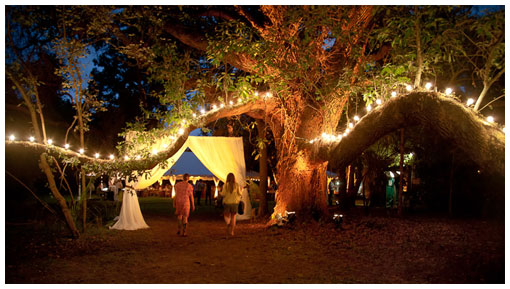 Wedding event venues charleston county parks and recreation old towne creek county park junglespirit Choice Image