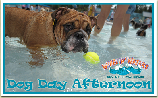 Dog Day Afternon at Whirlin Waters