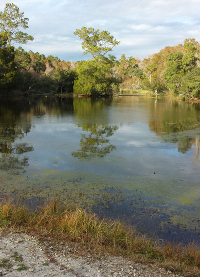 Image of the lake at Laurel Hill County park