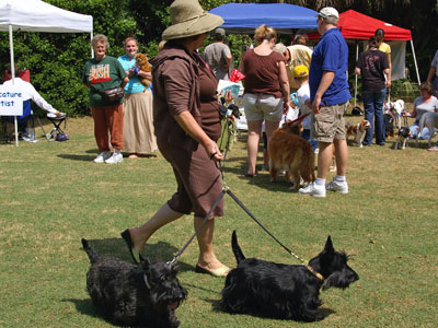 Scottie Dogs at Pet Fest