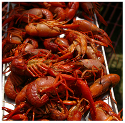 Image of crawfish
