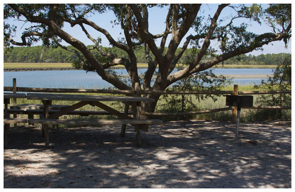 Image of picnic tables at Kiawah Beachwalker park shaded by a large Oak Tree.