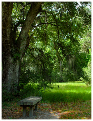 Image of a bench under a tree at Caw Caw Interpretive Center